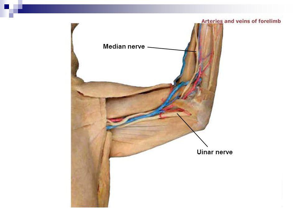 Median nerve Uinar nerve