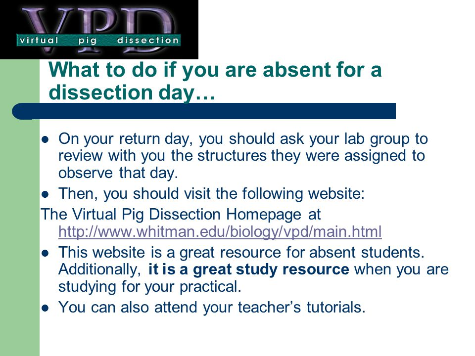 What to do if you are absent for a dissection day…