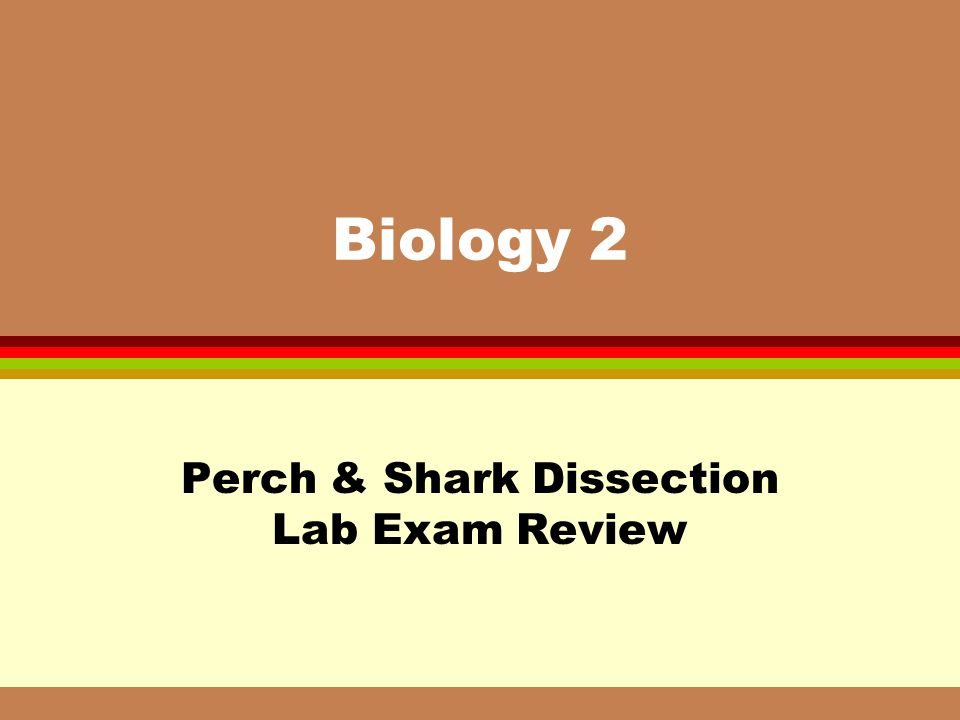Perch & Shark Dissection Lab Exam Review