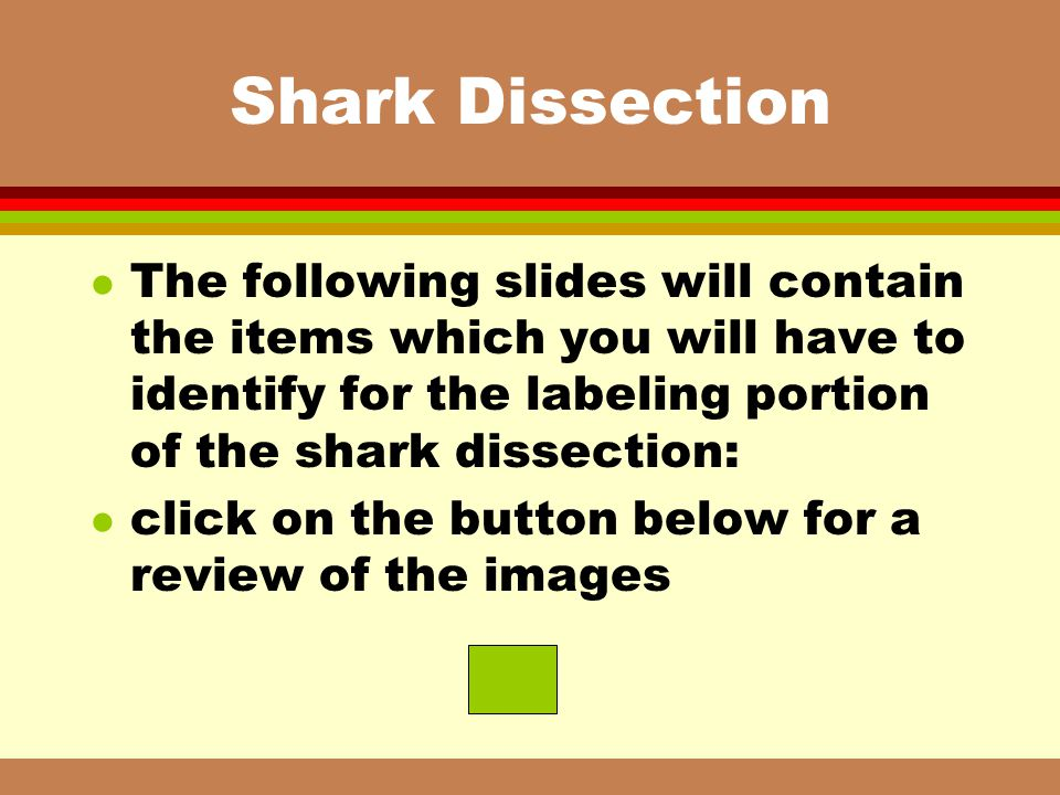 Shark Dissection The following slides will contain the items which you will have to identify for the labeling portion of the shark dissection: