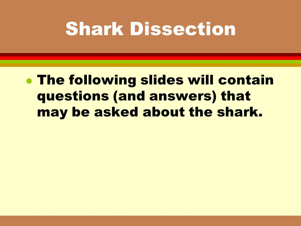 Shark Dissection The following slides will contain questions (and answers) that may be asked about the shark.
