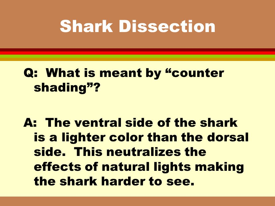 Shark Dissection Q: What is meant by counter shading