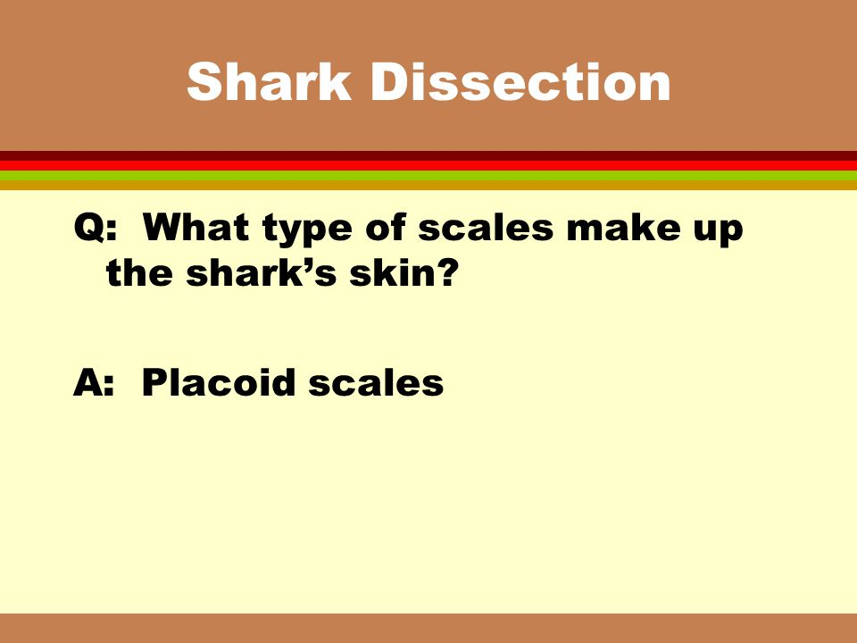Shark Dissection Q: What type of scales make up the shark's skin