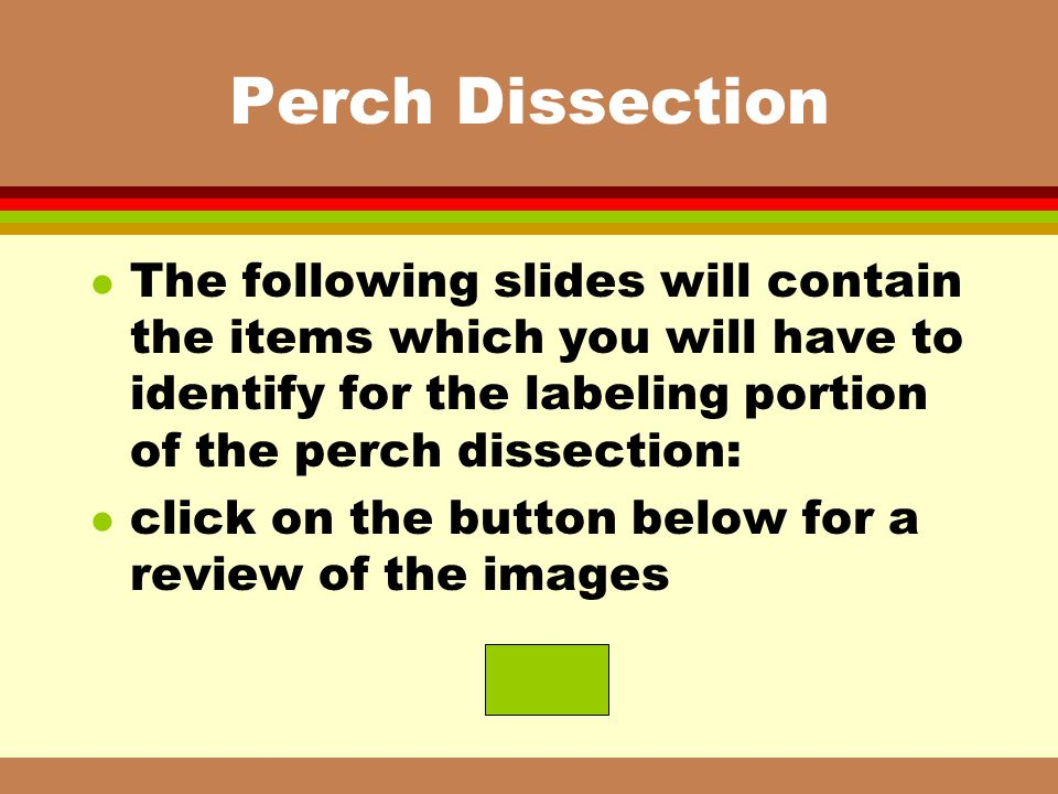 Perch Dissection The following slides will contain the items which you will have to identify for the labeling portion of the perch dissection: