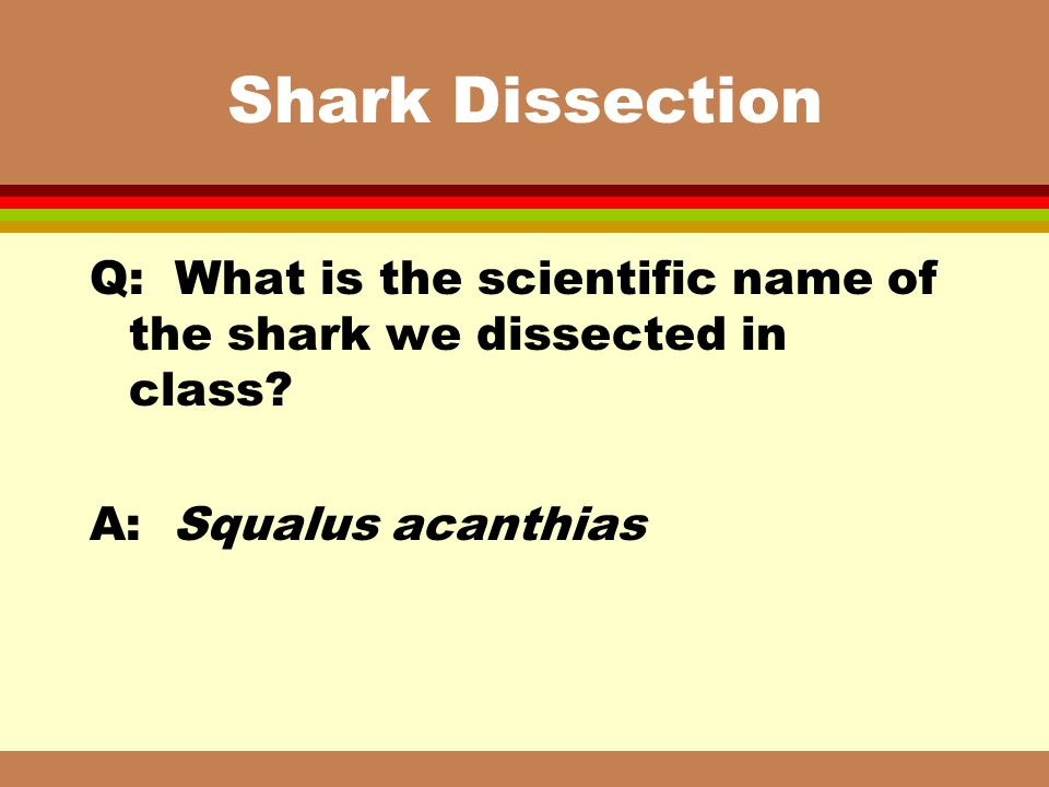 Shark Dissection Q: What is the scientific name of the shark we dissected in class.
