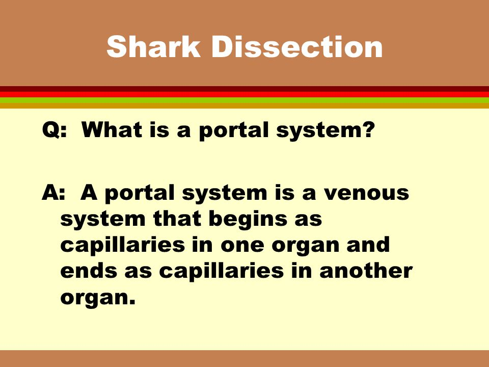Shark Dissection Q: What is a portal system