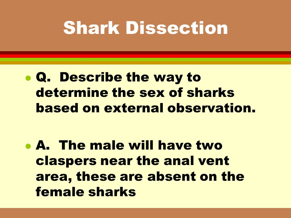 Shark Dissection Q. Describe the way to determine the sex of sharks based on external observation.