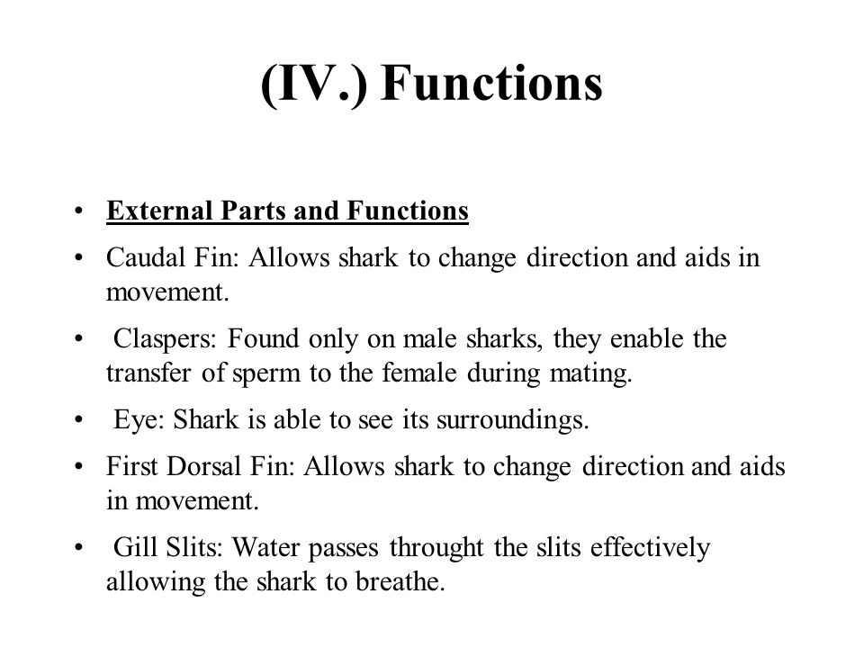 (IV.) Functions External Parts and Functions