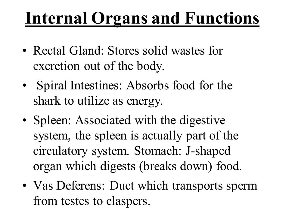 Internal Organs and Functions