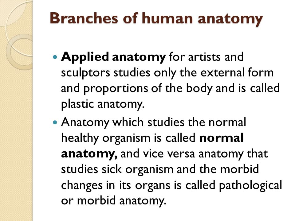 Branches of human anatomy