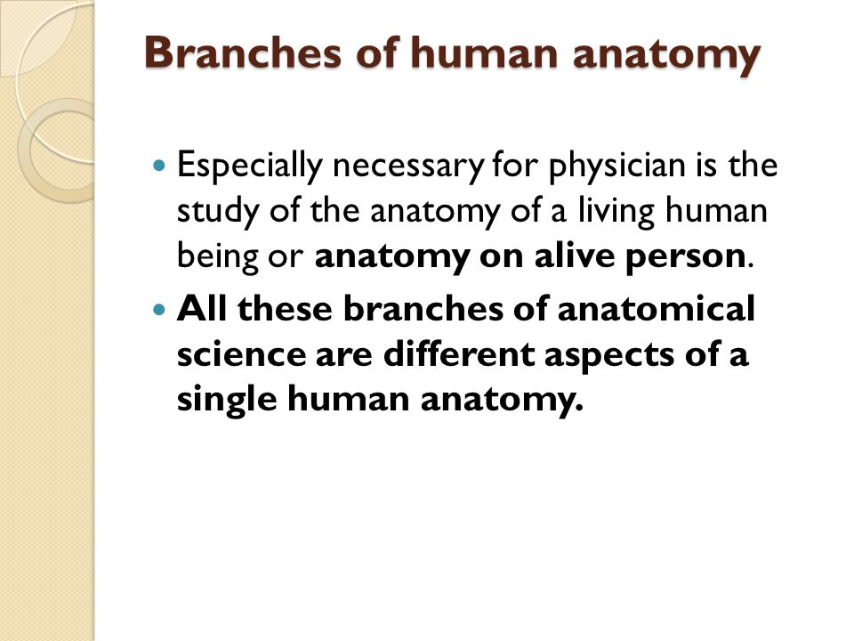 Contemporary Branches Of Human Anatomy Image Collection - Anatomy ...