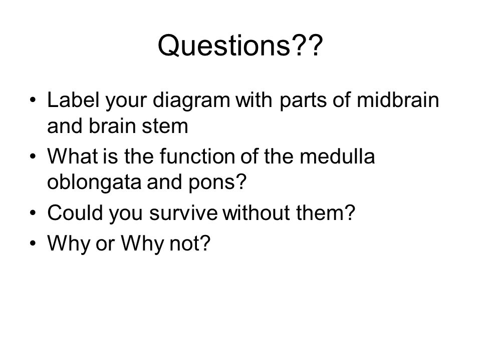 Questions Label your diagram with parts of midbrain and brain stem