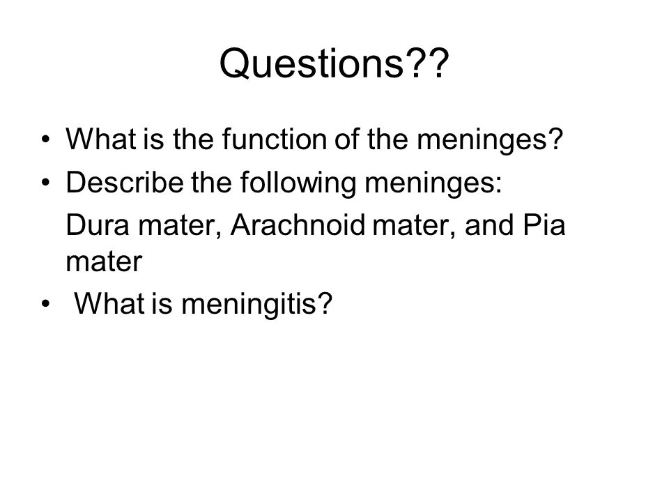 Questions What is the function of the meninges