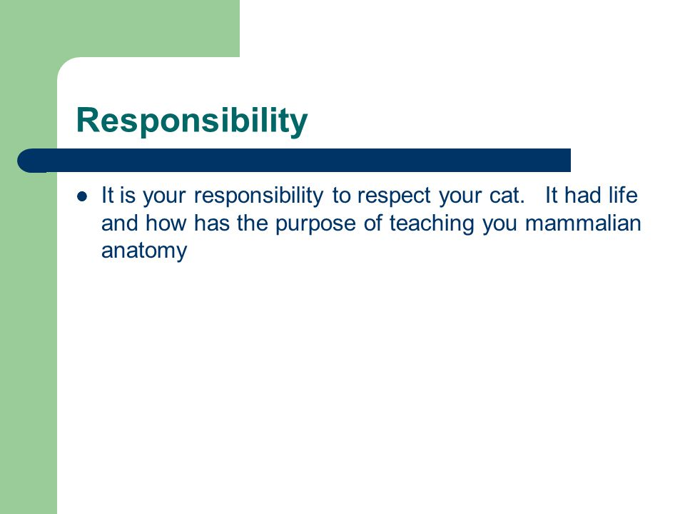 Responsibility It is your responsibility to respect your cat.