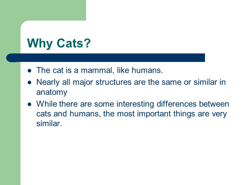Why Cats The cat is a mammal, like humans.