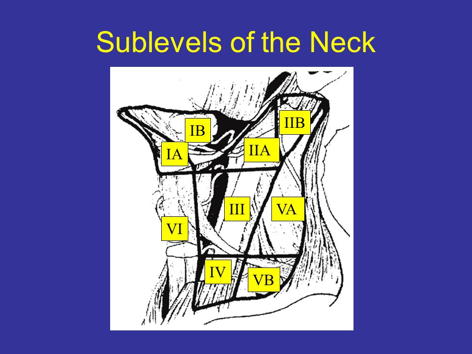 Sublevels of the Neck IIB IB IIA IA III VA VI IV VB