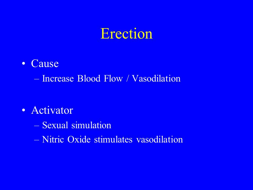 Erection Cause Activator Increase Blood Flow / Vasodilation