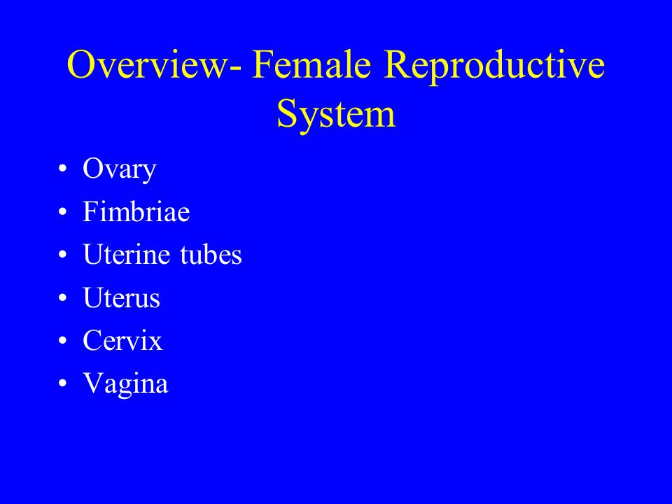 Overview- Female Reproductive System