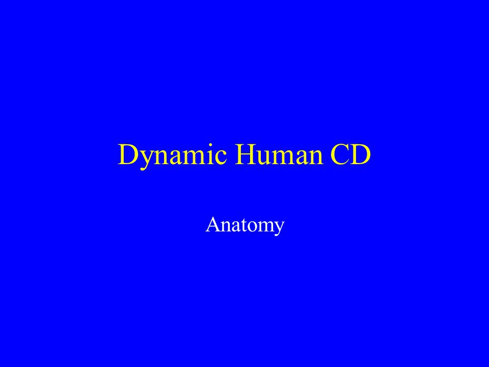 Dynamic Human CD Anatomy