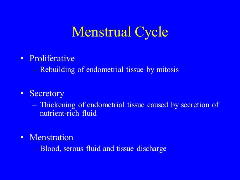 Menstrual Cycle Proliferative Secretory Menstration
