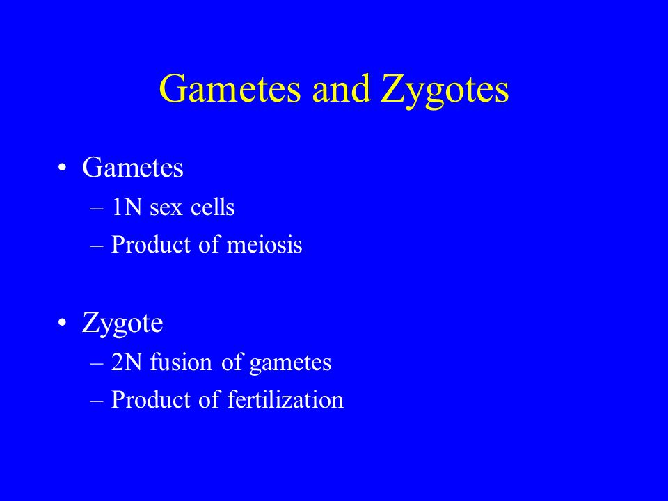 Gametes and Zygotes Gametes Zygote 1N sex cells Product of meiosis