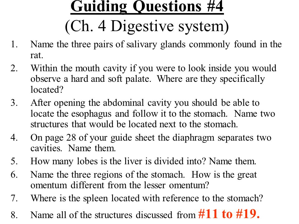 Guiding Questions #4 (Ch. 4 Digestive system)