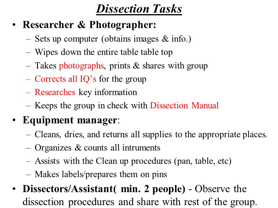 Dissection Tasks Researcher & Photographer: Equipment manager: