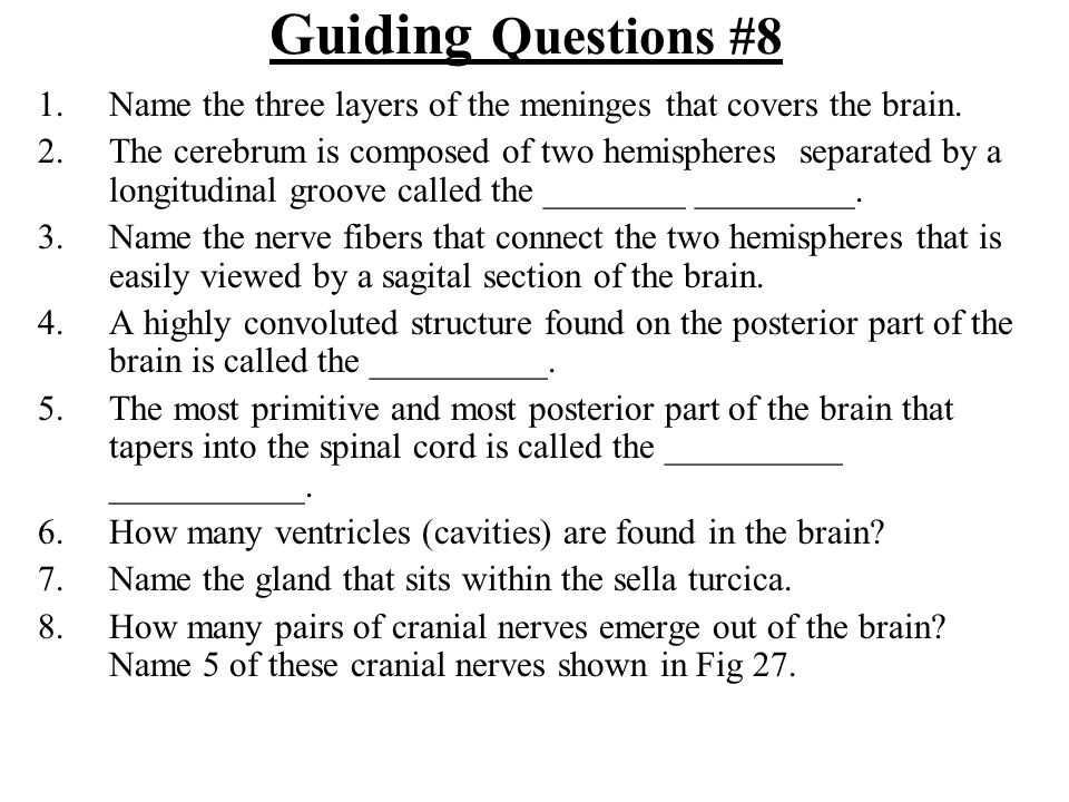 Guiding Questions #8 Name the three layers of the meninges that covers the brain.