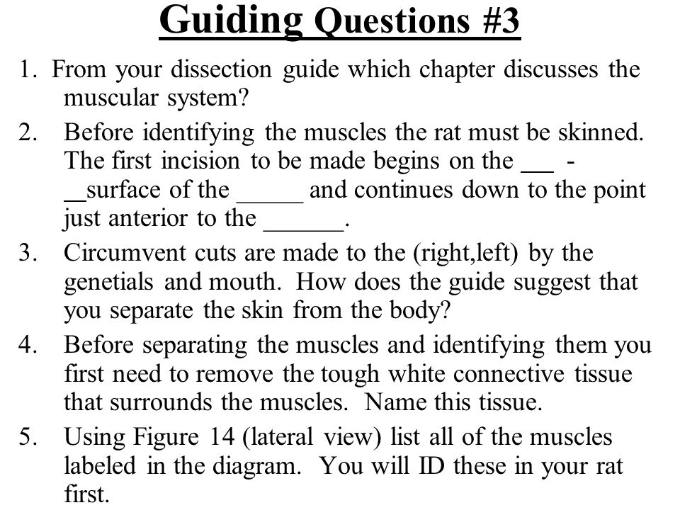 Guiding Questions #3 1. From your dissection guide which chapter discusses the muscular system