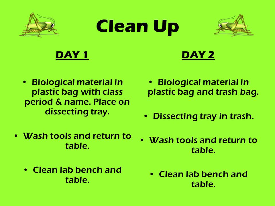 Clean Up DAY 1. Biological material in plastic bag with class period & name. Place on dissecting tray.