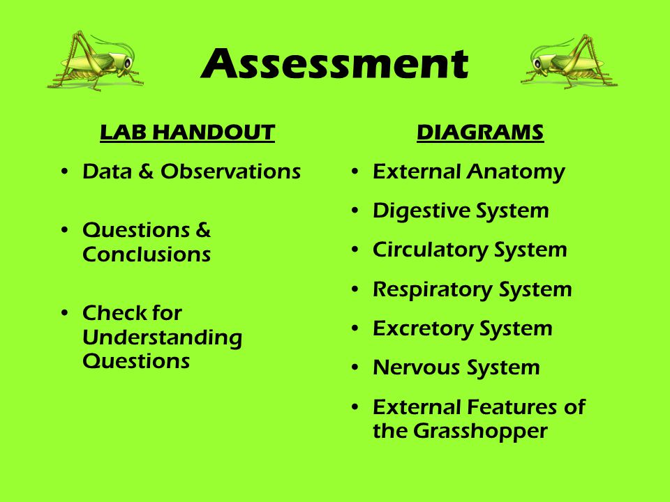 Assessment LAB HANDOUT Data & Observations Questions & Conclusions