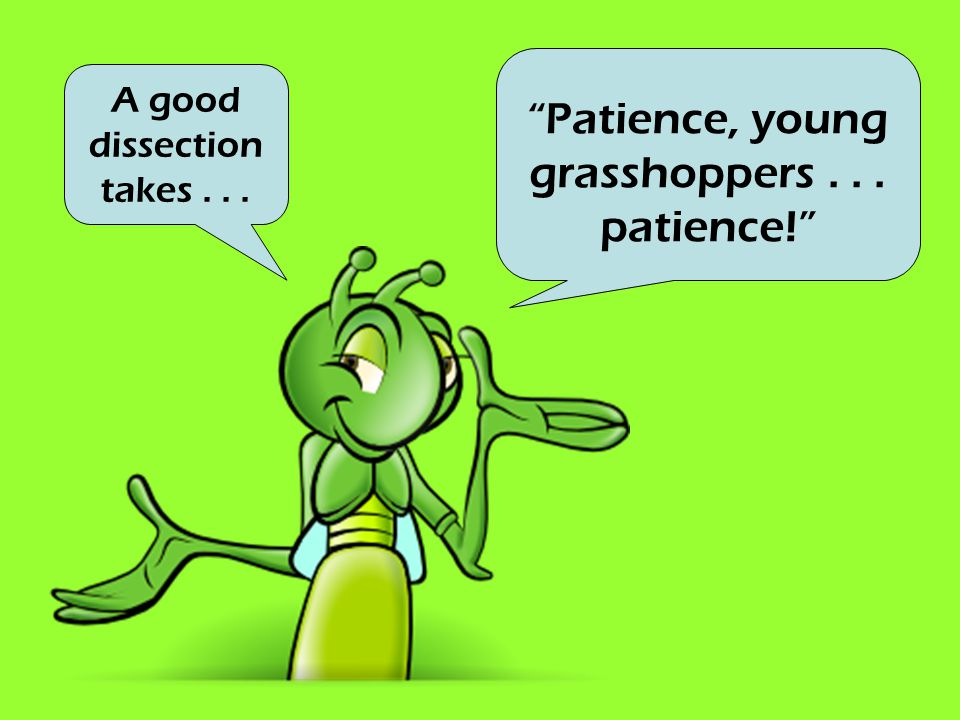 Patience, young grasshoppers . . . patience!