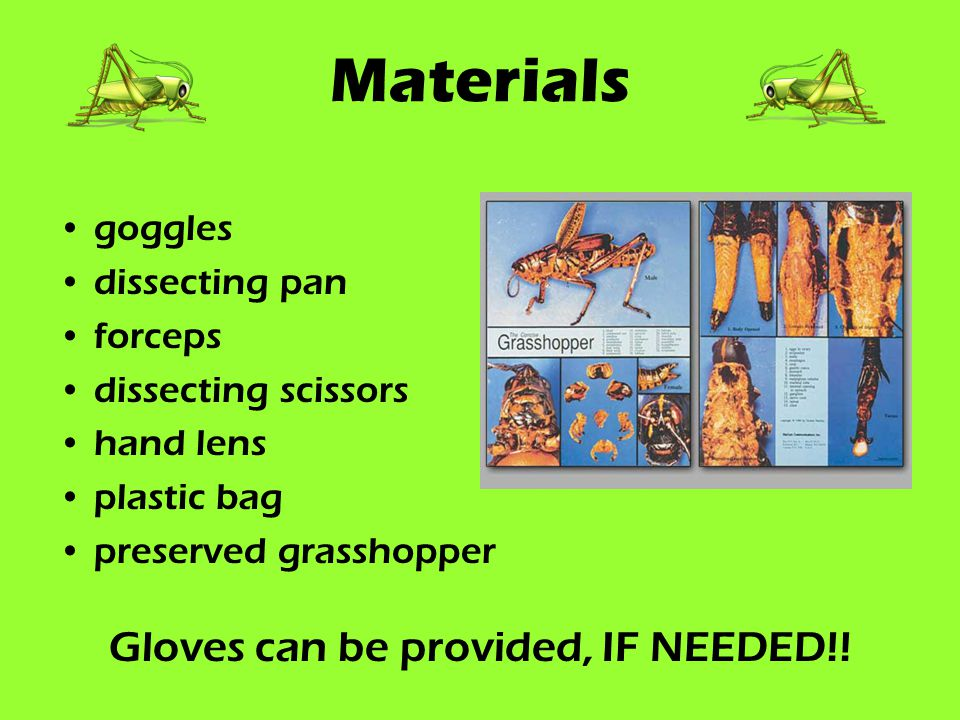Gloves can be provided, IF NEEDED!!