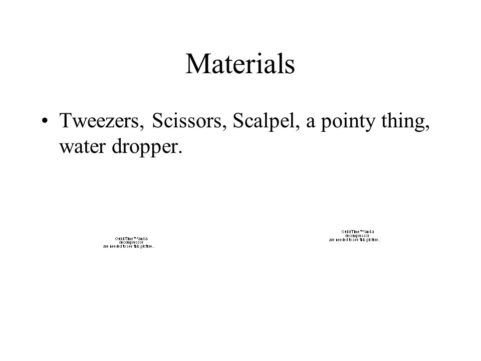 Materials Tweezers, Scissors, Scalpel, a pointy thing, water dropper.