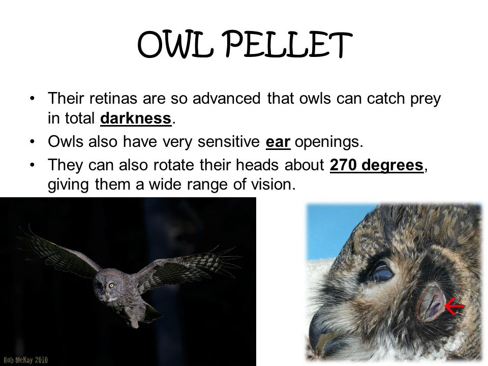 OWL PELLET Their retinas are so advanced that owls can catch prey in total darkness. Owls also have very sensitive ear openings.