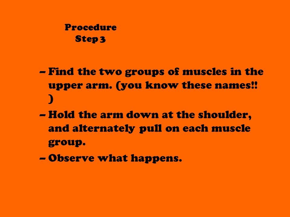 Procedure Step 3 Find the two groups of muscles in the upper arm. (you know these names!! )
