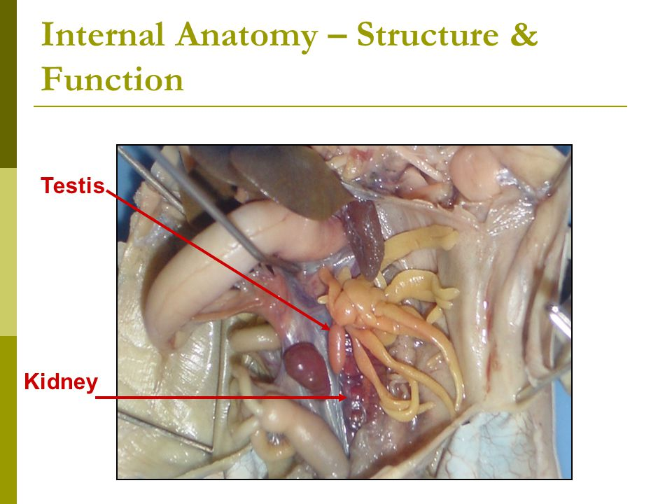 Internal Anatomy – Structure & Function