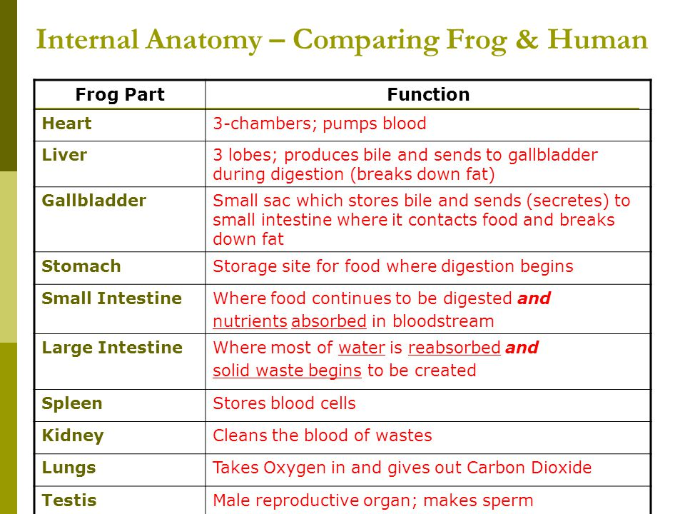 Internal Anatomy – Comparing Frog & Human