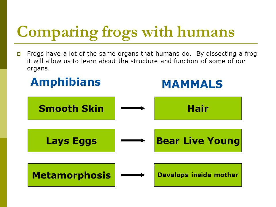 Comparing frogs with humans