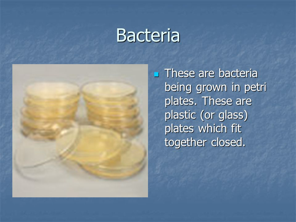 Bacteria These are bacteria being grown in petri plates.