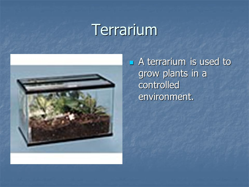 Terrarium A terrarium is used to grow plants in a controlled environment.