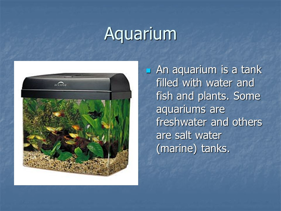 Aquarium An aquarium is a tank filled with water and fish and plants.