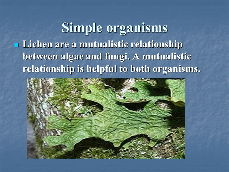 Simple organisms Lichen are a mutualistic relationship between algae and fungi.
