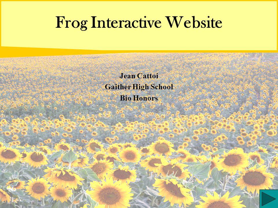 Frog Interactive Website