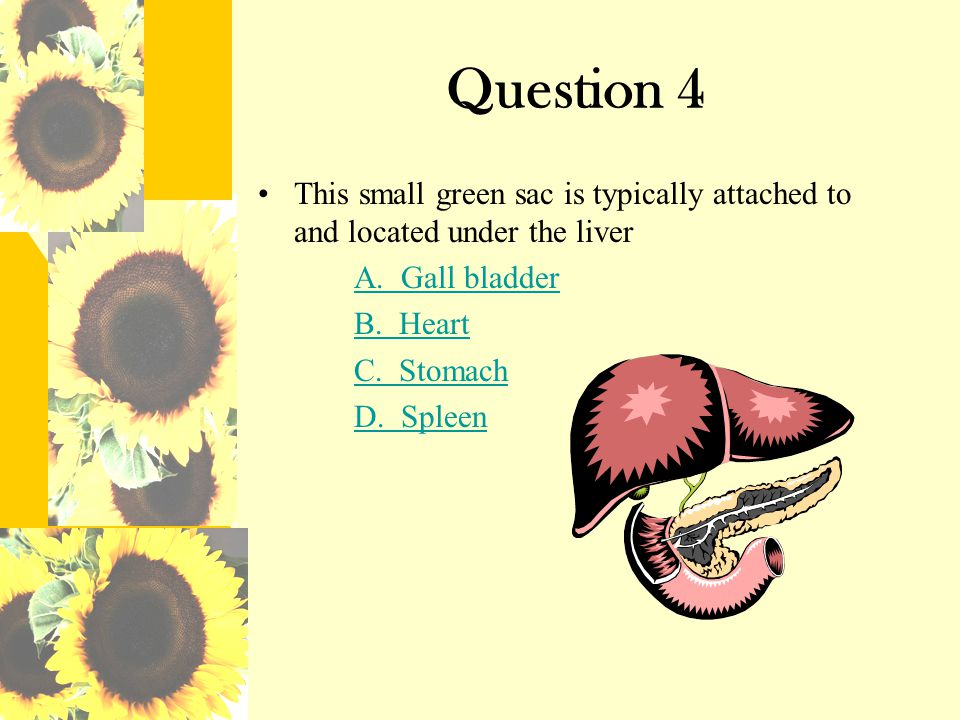 Question 4 This small green sac is typically attached to and located under the liver. A. Gall bladder.