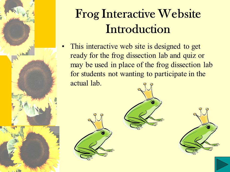Frog Interactive Website Introduction