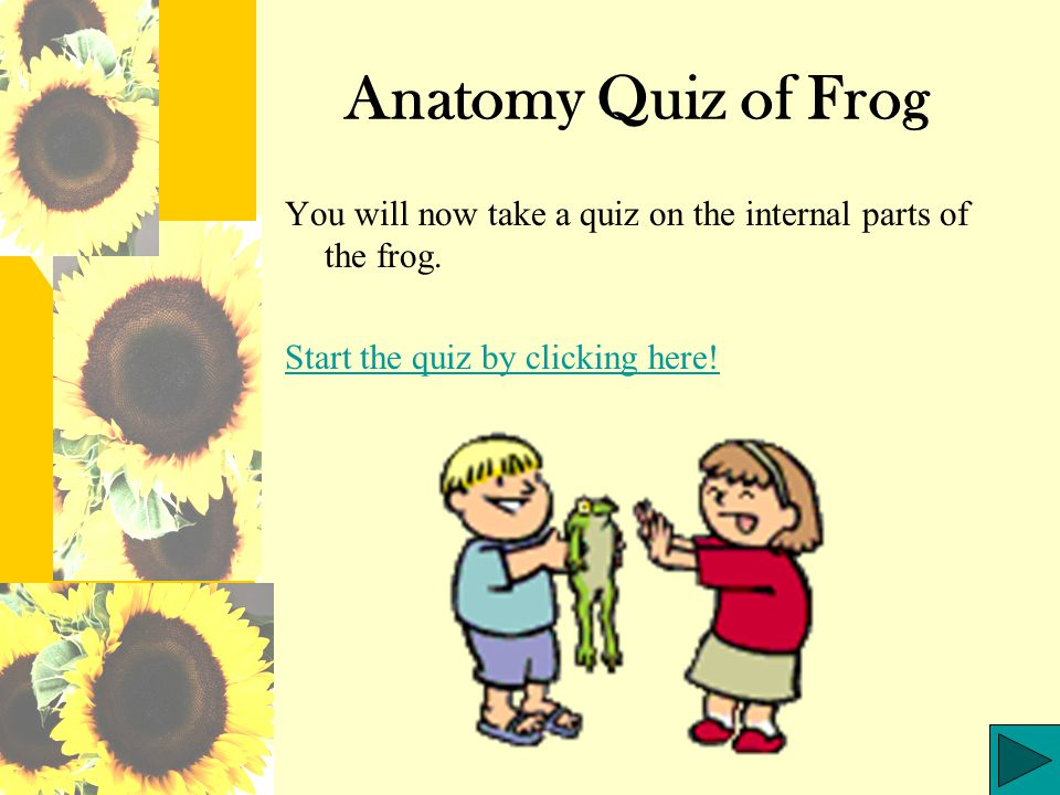 Anatomy Quiz of Frog You will now take a quiz on the internal parts of the frog.