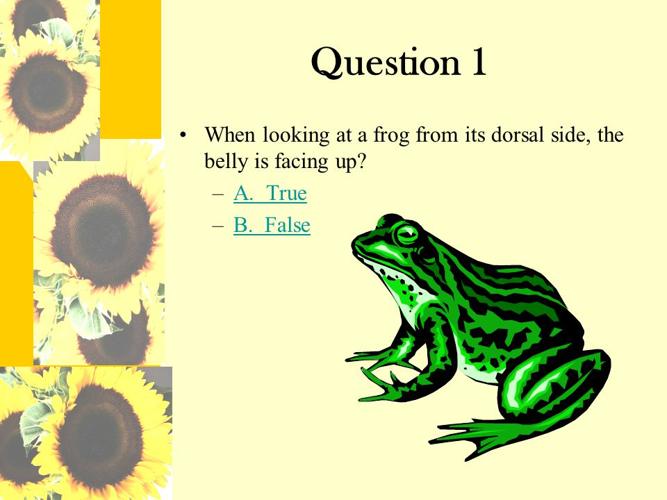 Question 1 When looking at a frog from its dorsal side, the belly is facing up A. True B. False