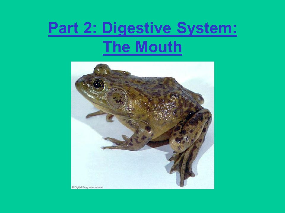 Part 2: Digestive System: The Mouth