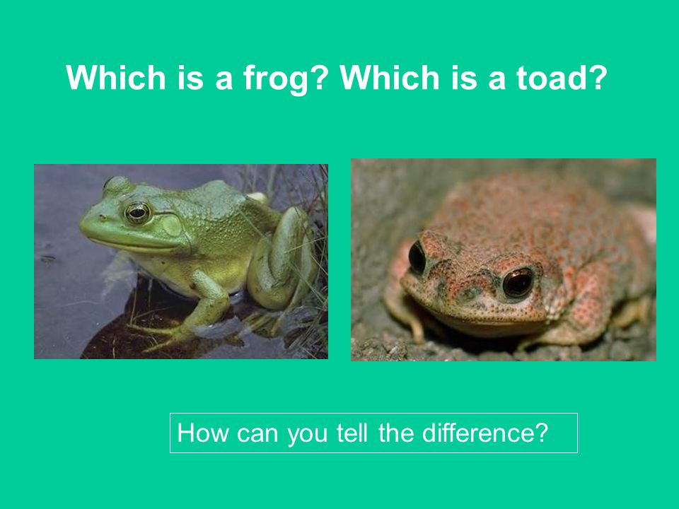 Which is a frog Which is a toad